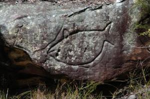 Aboriginal rock carving on the Hawkesbury